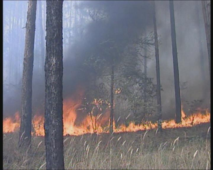 酷暑恐致俄山林出现新火点
