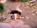 可爱搞笑狗狗