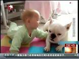 搞笑!狗狗教宝宝爬行
