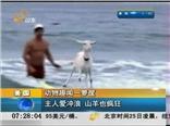 动物趣闻一箩筐:主人爱冲浪  山羊也疯狂