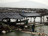 双台风苏拉达维袭击江苏 10万人转移近年