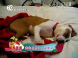 搞笑趣闻:狗狗在睡梦中大笑醒来
