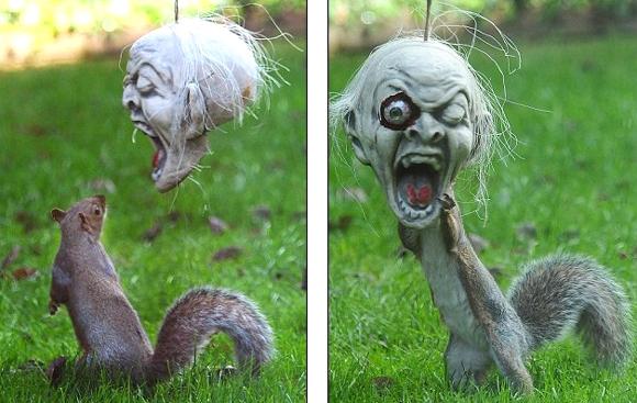 好奇小松鼠带万圣节僵尸面具