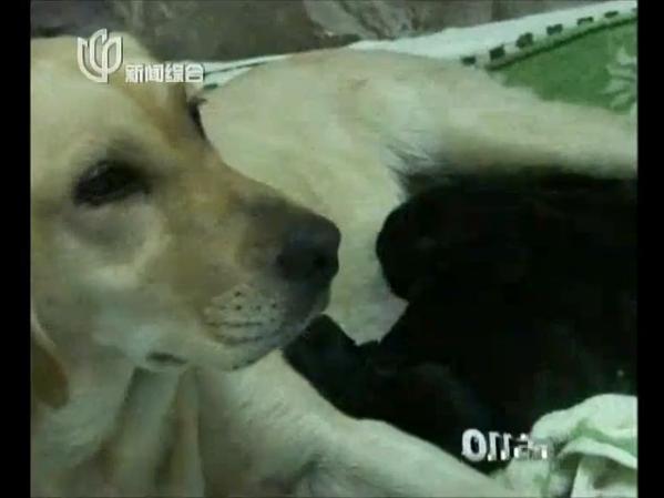 东方110:警犬的故事