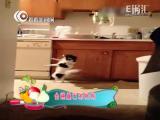 搞笑视频:爆笑!小狗狗也有跳舞天赋