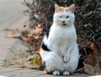 """在南京农业大学拍到的一组流浪"""" 当时室外气温-2°C,猫咪将两只手"""
