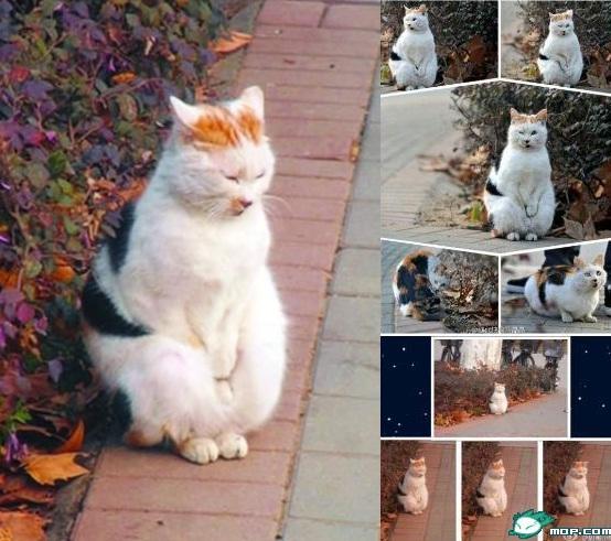 她说,自己喂养的猫咪,样子不同 核心提示   南京农业大学的女生小