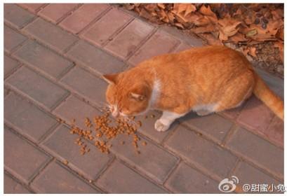 南京农业大学搓手猫走红网络 南方连年降温虽萌却令人心酸