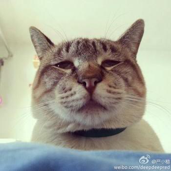 南京农业大学猫咪-南农大 搓手猫 取暖萌状融化人心 盘点小萌宠有张明星脸
