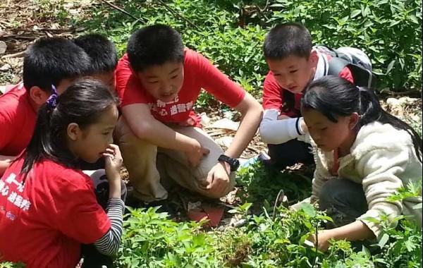 小记者们与云南的小伙伴一同割猪草干家务