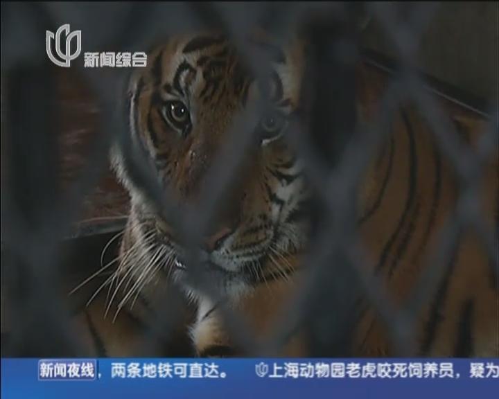 见:老虎咬人事件