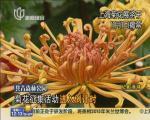 上海菊花展将于11月1日揭幕