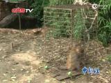 视频:河南4耍猴人东北被拘 欲上诉为猴戏正名