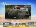 重庆:农民河道挖出乌木卖19.6万元被判充公