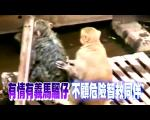 猴子触电 同伴救援