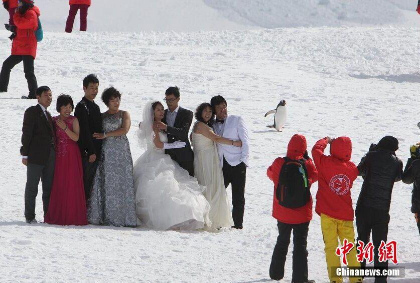 中国掀南极旅游热:冰川上拍婚纱照