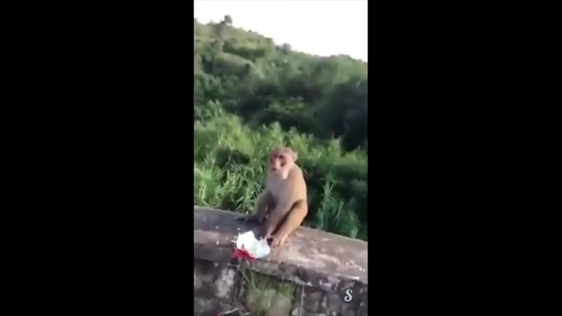 残忍!实拍:猴子讨食手指被炸鲜血淋漓 男子放声大笑