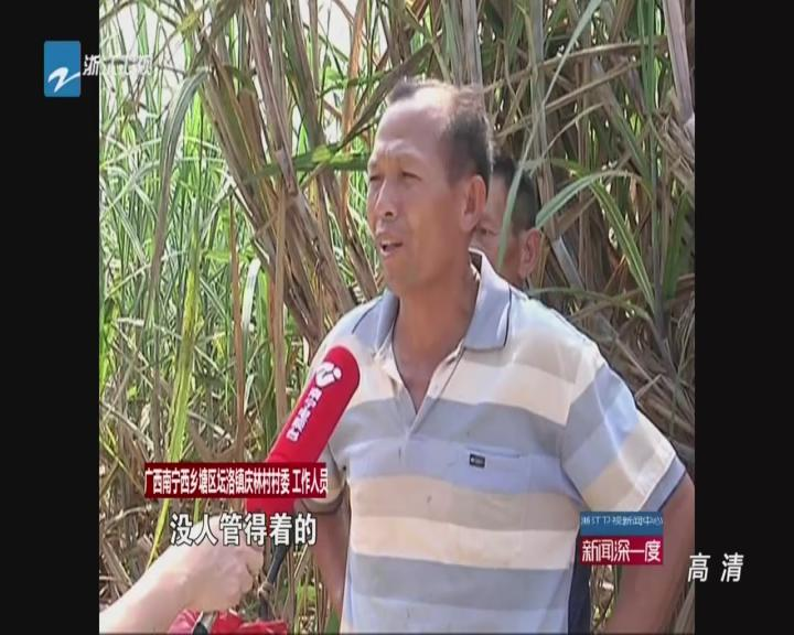 记者调查:南宁地下冻肉交易——香蕉地里冻肉交易  横行3年查处无果