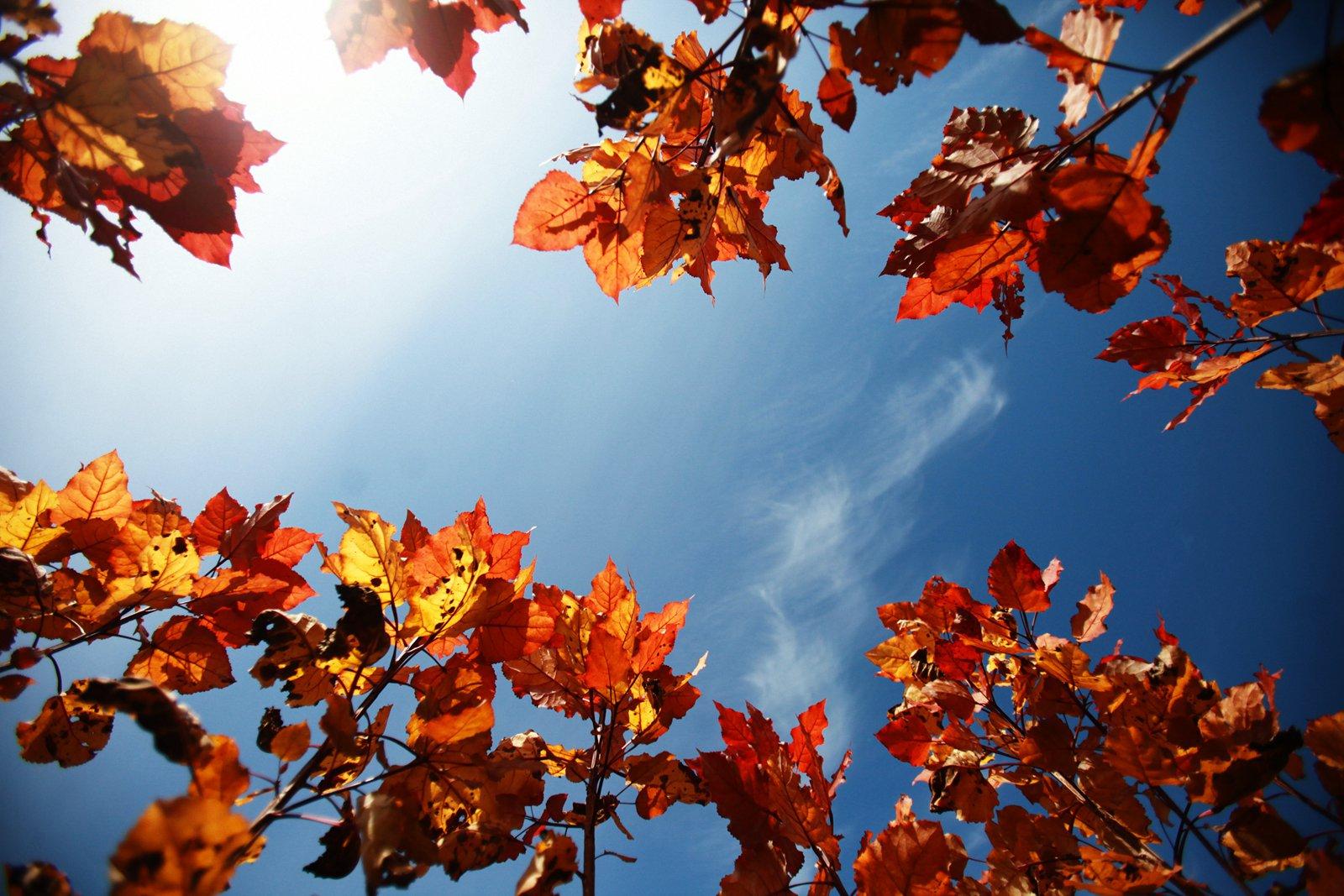 天凉好个秋!盘点各地金秋美景