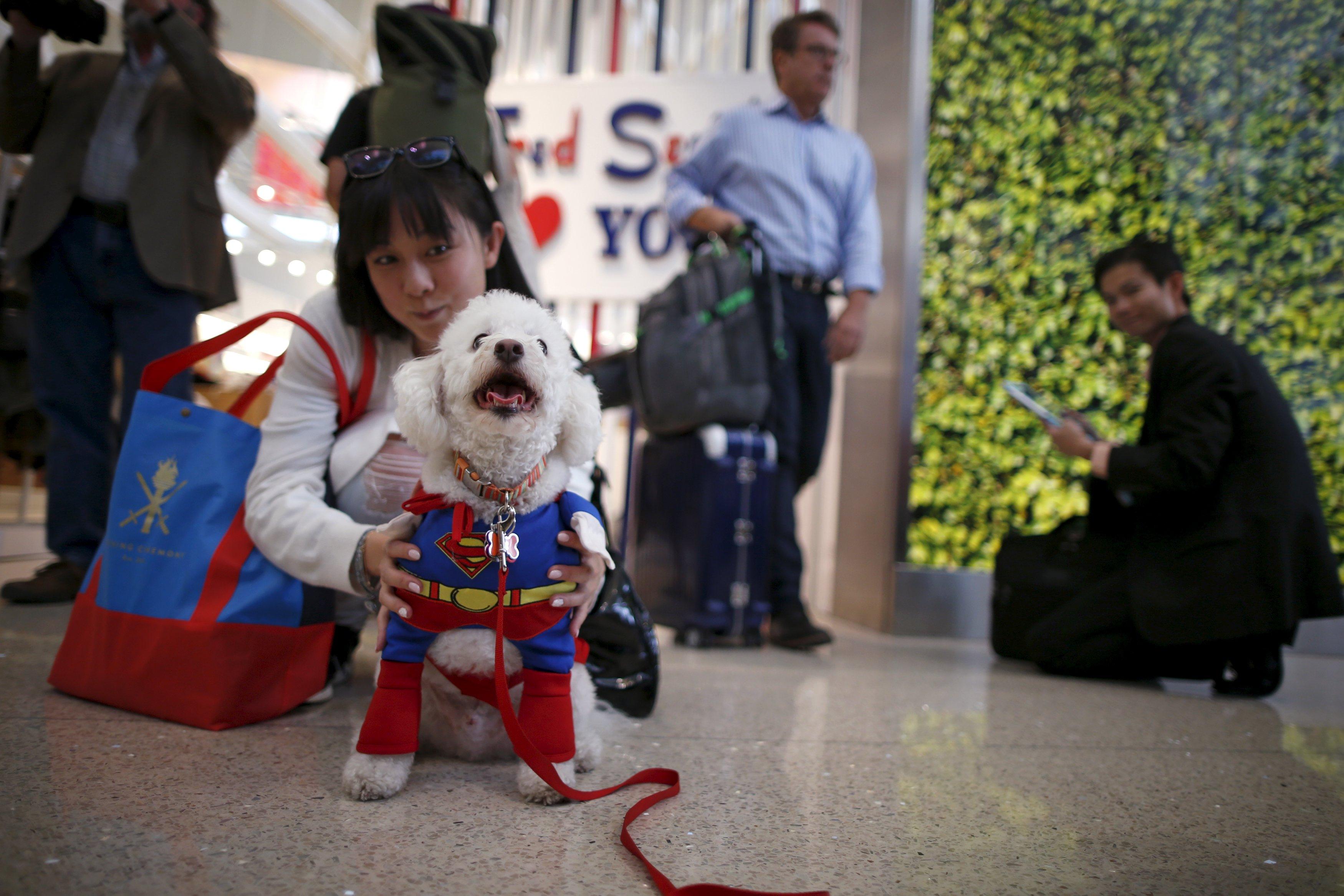 洛杉矶机场现新福利 狗狗盛装亮相与乘客互动超治愈