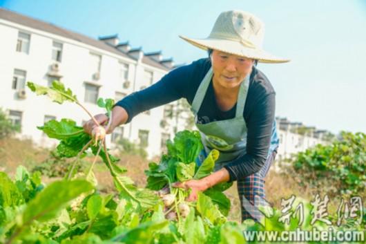 """彭三先:生态环保实现""""最美乡村""""梦"""