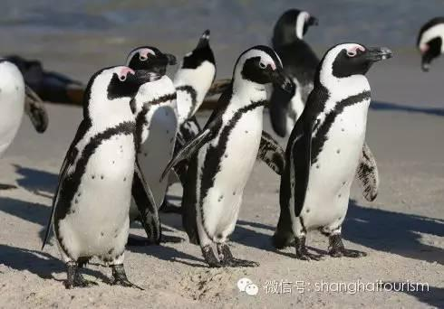 """详企鹅的""""呆萌""""样"""