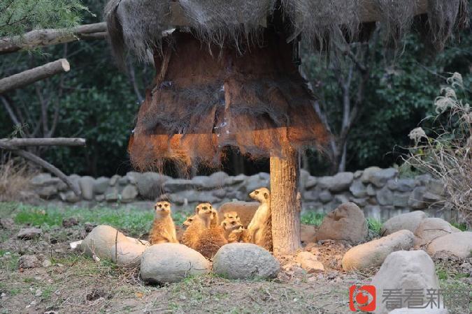 其实在上海野生动物园里