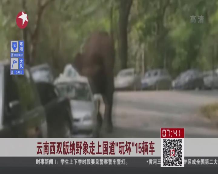 """云南西双版纳野象走上国道""""玩坏""""15辆车"""