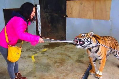 【微看天下】地球上最危险的动物园——日本