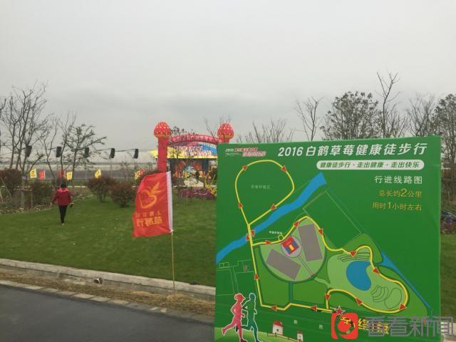 上海青浦白鹤草莓节开幕 今年单价每斤上涨4元