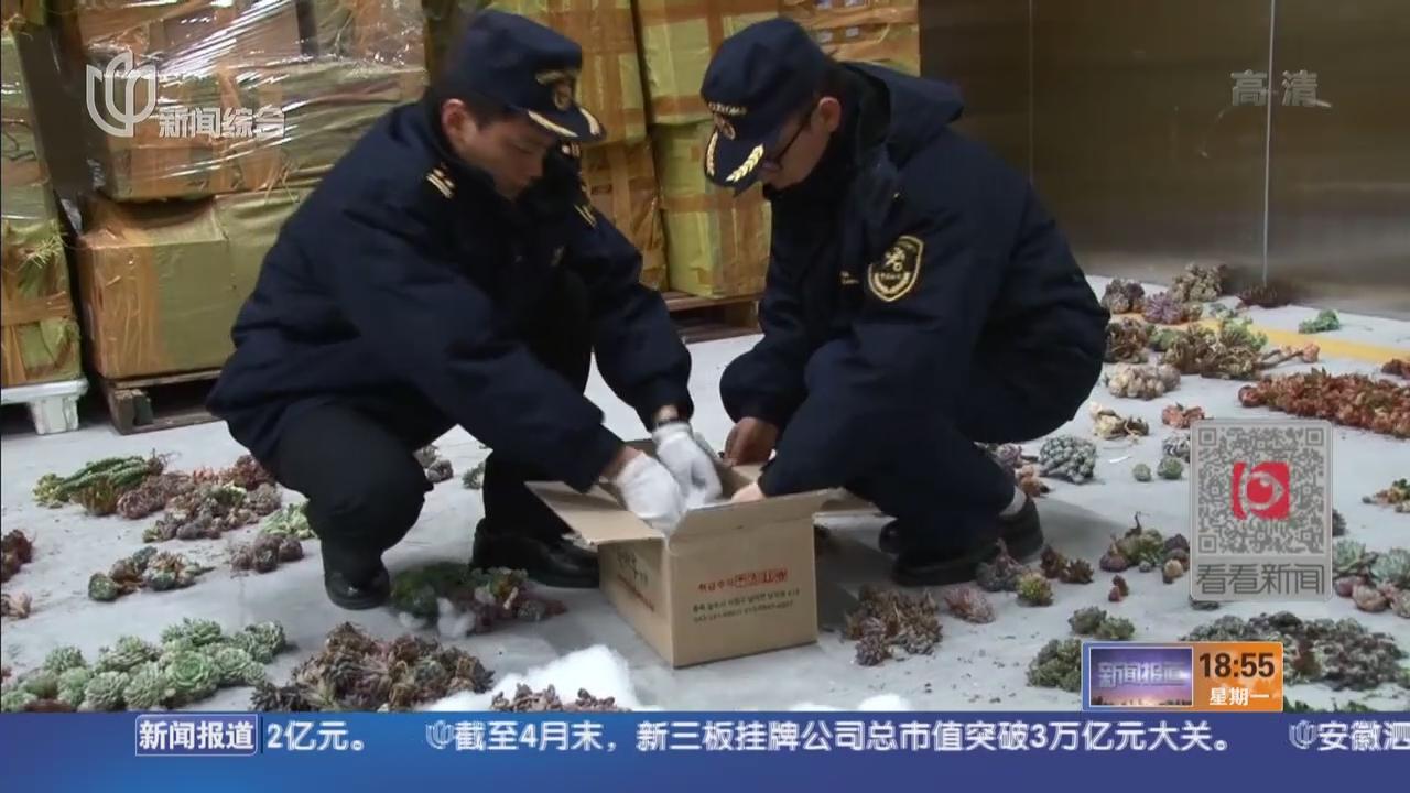 上海海关:查获一起大量多肉植物植株走私案