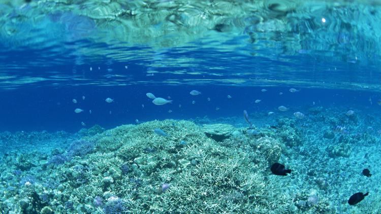 2016世界海洋日 保护生灵挽救蔚蓝