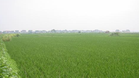 """国土部:""""十三五""""基本农田将达15.64亿亩"""