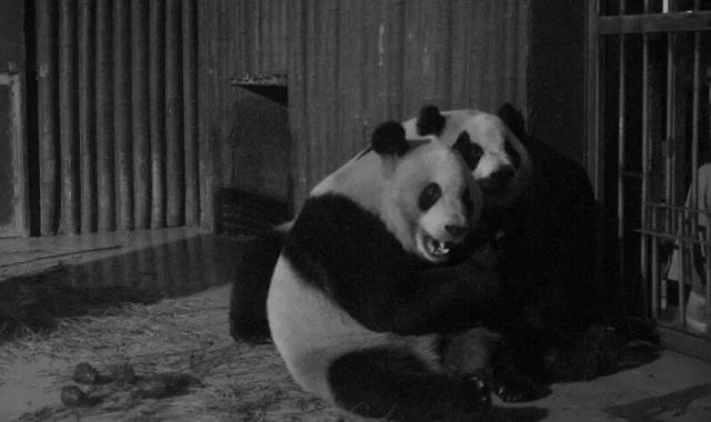 """上海动物园2016""""动物奇妙夜""""夏令营即将启动"""