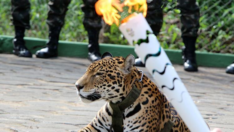 场馆废了、火炬传递吉祥物死了 里约奥运会想说爱你不容易