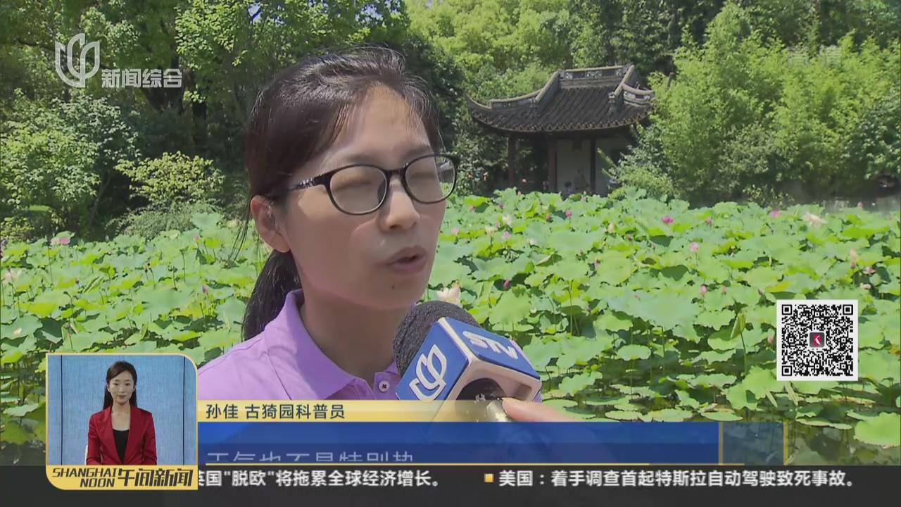 第四届上海荷花睡莲展揭幕