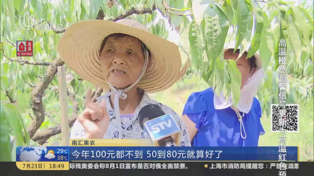 上海水蜜桃减产超半  预计月底结束销售