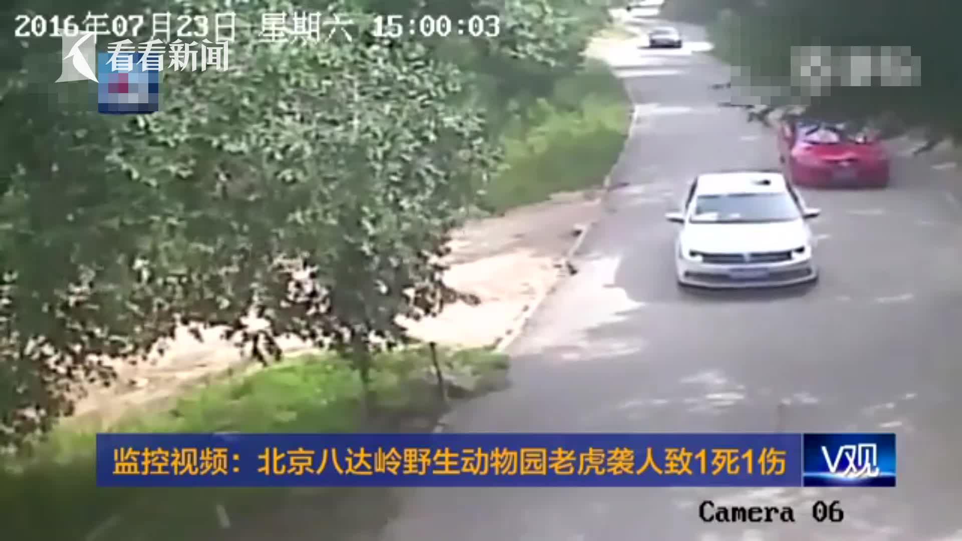 监控画面:女子野生动物园私自下车 被老虎袭击叼走