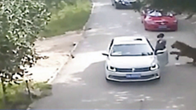 东北虎致游客伤亡事件调查结果:不属于生产安全责任事故
