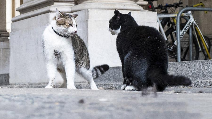 """英国""""外交猫""""闯首相府 归途遇见""""死对头"""""""