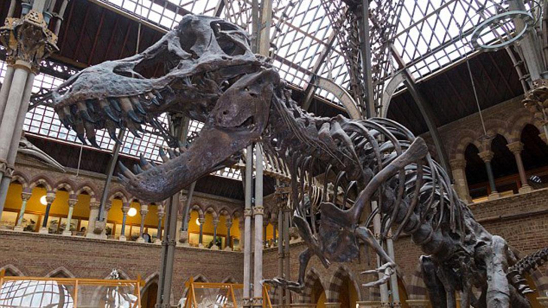 """英国持续高温牛津博物馆未能""""防晒"""" 珍贵恐龙骨架恐受损"""