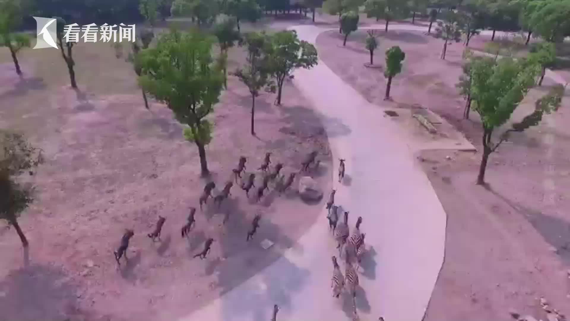 【航拍】飞越上海野生动物园