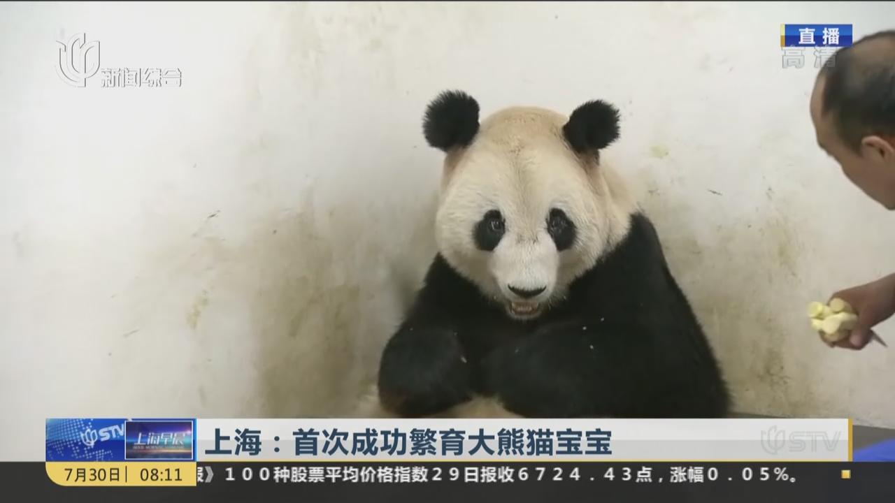 上海首次成功繁育大熊猫宝宝