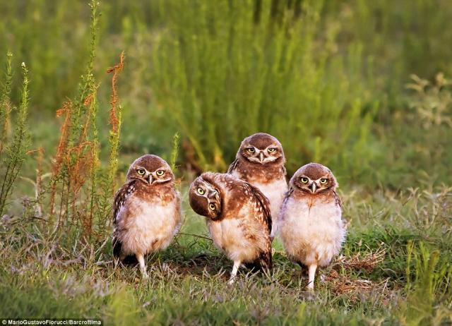 2016年搞笑野生动物摄影大赛获奖作品公布