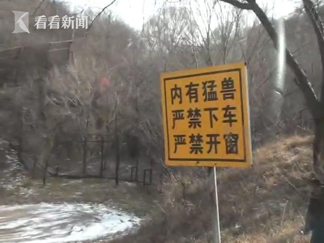 北京八达岭动物园东北虎园重新开[00_00_40][20161128-173901-2].JPG