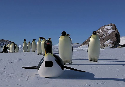 """帝企鹅群跟在""""间谍摄像机""""后面"""