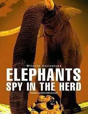 """《象群中的间谍》,图下方是""""粪便""""摄像机"""