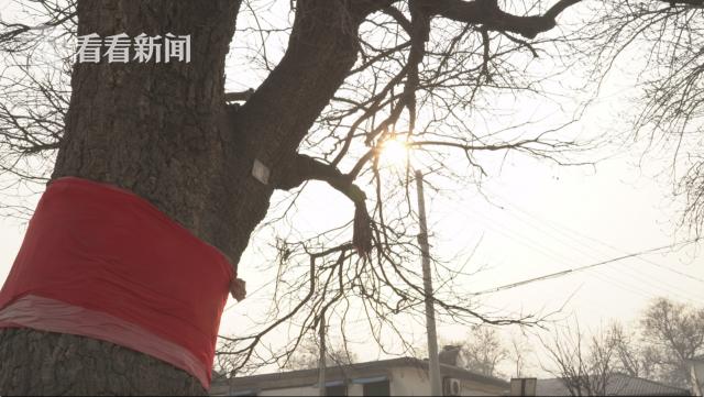 村门口的老槐树