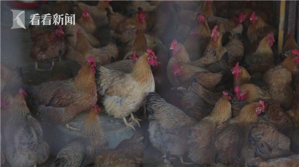 禽类是当前H7N9禽流感病毒的宿主