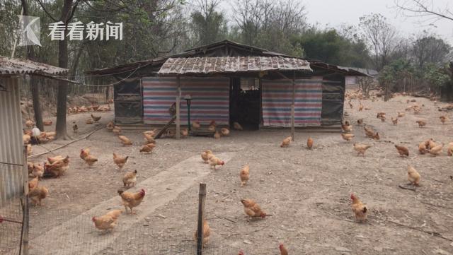 周志生的自营鸡场